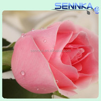 Wholesale desert rose plants for sale