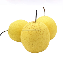 Fresh Delicious Chinese Pear Asian Pear (Golden pear ) Hot Sale