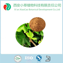 High quality ivy leaf extract/ivy cap wholesale powder