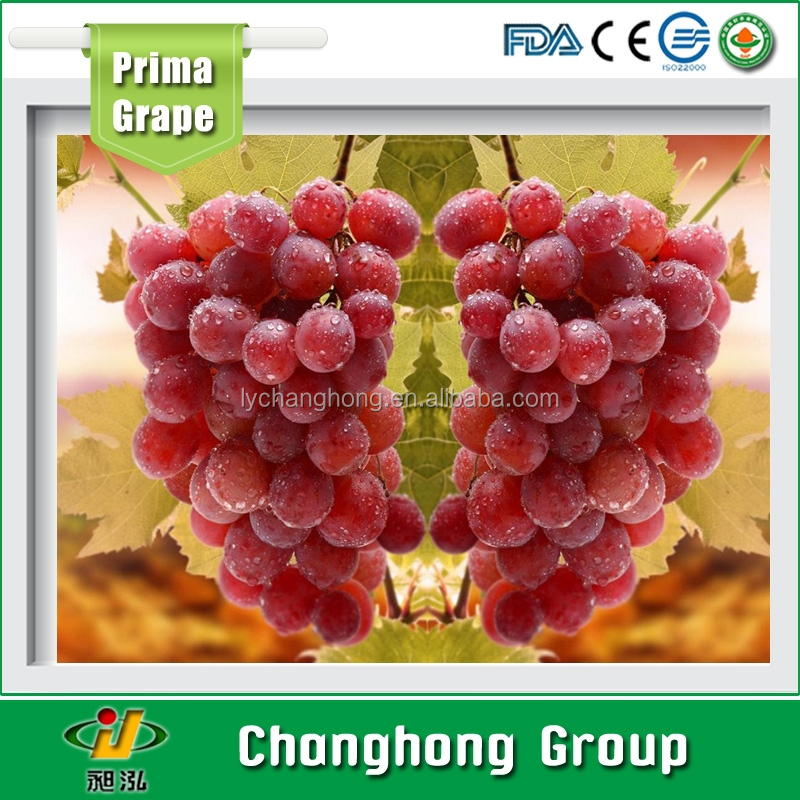 Ruby Grape fruit from China
