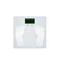 OEM / ODM Transtek Professional Digital Body Scale with Competitive Price