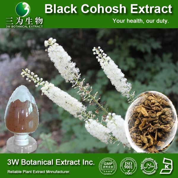 100% Natural High Quality Black Cohosh Powder Extract