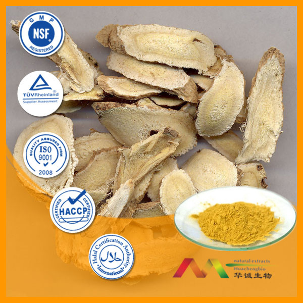 GMP Supplier Bottom Price 0.2%-98% Astragaloside IV Astragalus Root P.E.
