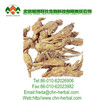 High quality natural plant extract Angelica Dong Quai Extract