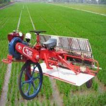 small farm used Rice Planting Machine / Paddy Rice Transplanter 0086-15238020689