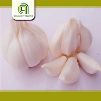 Professional snow white garlic with high quality