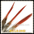 Natural Red Tips Feather Pheasant Golden Tail