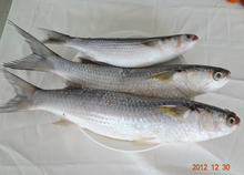 Frozen Gray Mullet Seafood Fish