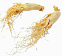 Natural herb extract American Ginseng Extract powder