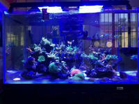 20000k led aquarium led light 72 inch led aquarium light timer sunrise and sunset aquarium light led wifi controller