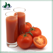 Super quality green pollution-free canned pure gino tomato paste