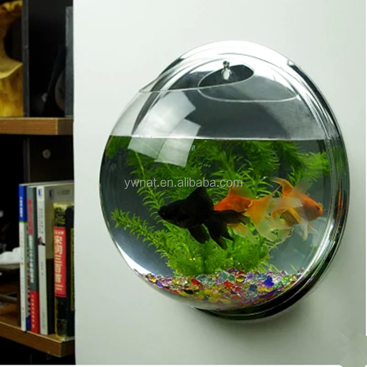 Acrylic wall hanging fish bowl buy decorative fish bowls for Acrylic fish bowl
