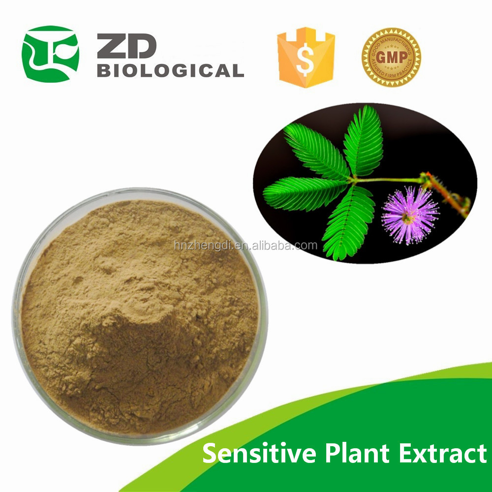 100% Nature Sensitive Mimosa Hostilis Plant Extract,Mimosa Powders