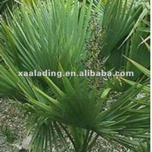 Saw palmetto Extract Total Fatty Acid25%-50%