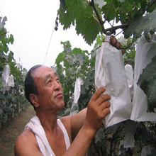 Nonwoven Technics and dot banana mango fruit protection Bag crop cover