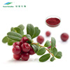 Chinese Factory Health Food Cranberry Fruit Powder Extract 40% Proanthocyanidins by UV-VIS