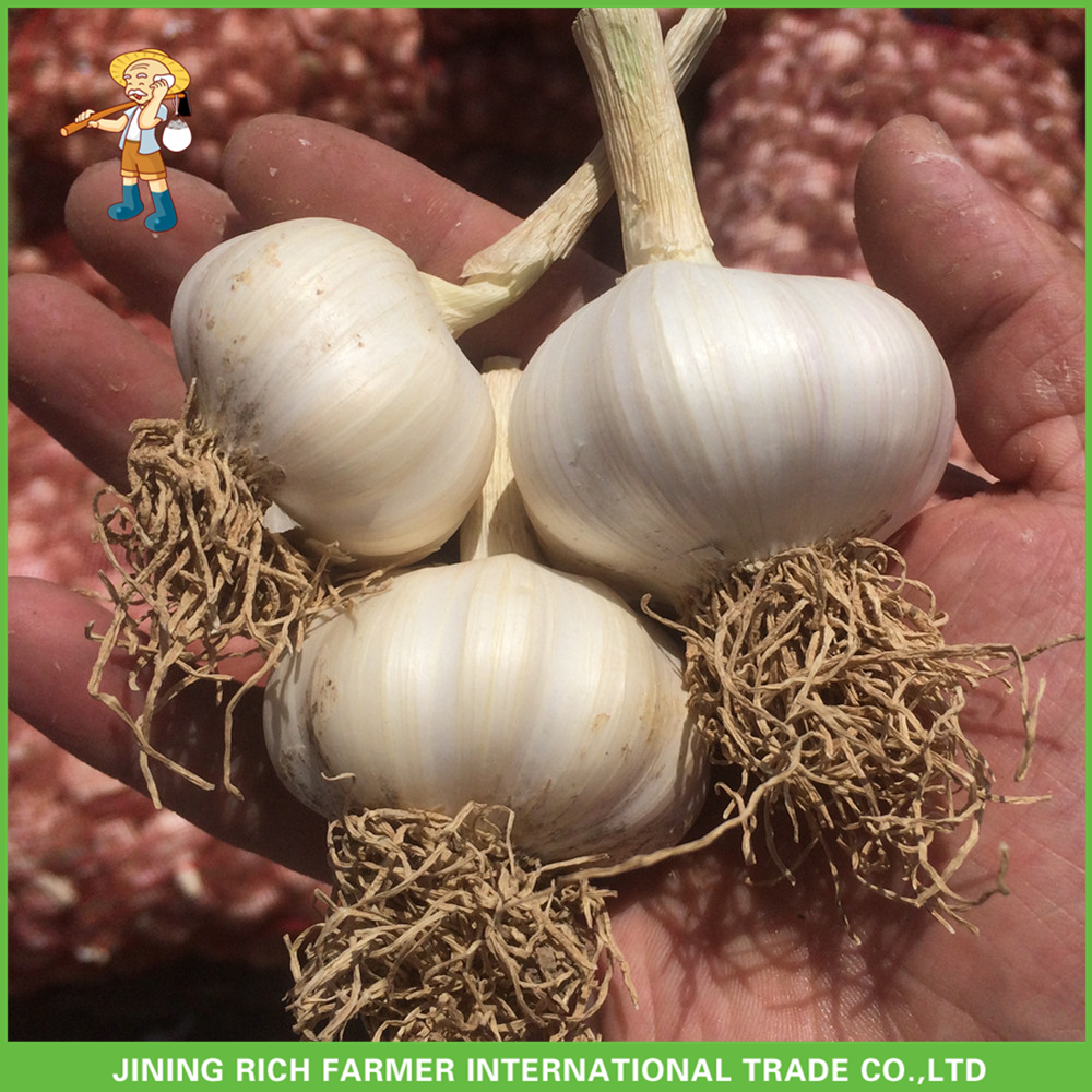 Best Price China Fresh Garlic And Whole Garlic Snow White Garlic