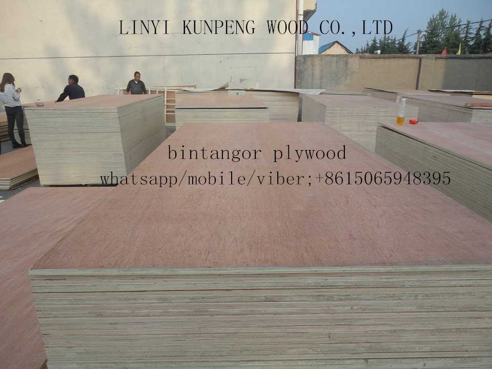 Bintangor veneer face/back plywood, bintangor plywood for furniture