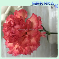 New Arrival carnation cut flower prices Flower Explosion