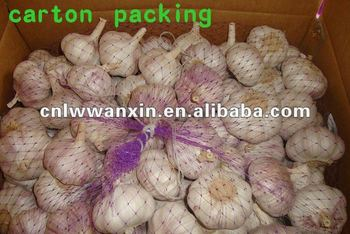 vegetable price list natural garlic from China