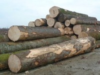 European Spruce wood logs and lumber KD, Spruce logs,sawn timber