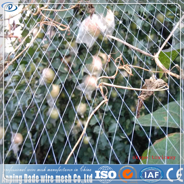 Warp knitted/woven anti insect net,Drawing Plastic Modling Type insect proof net for vegetables/fruits/crops