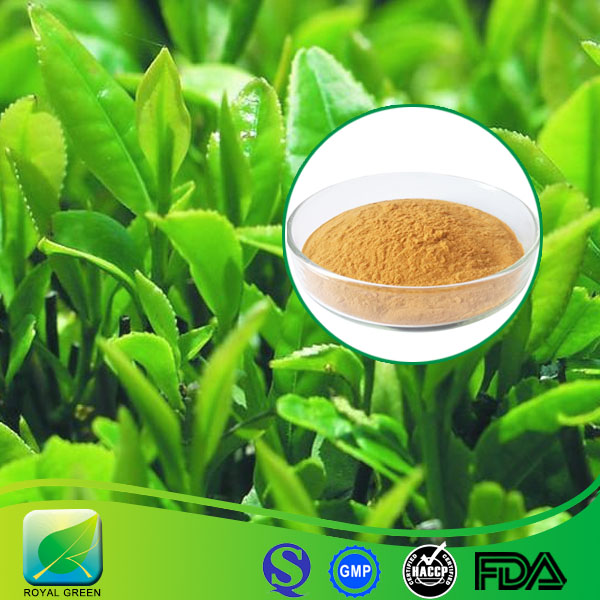 Green tea leaf extract / Camellia sinensis /polyphenols 90% EGCG