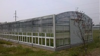 Plastic Tunnel Green House For Agricultural For The Tropics
