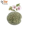 /product-detail/raw-marshmallow-leaf-plant-cutting-bulk-in-stock-60761816038.html