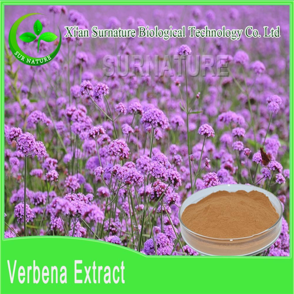 relieving pain / Vervain Extract from shrub verbena