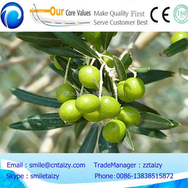 gasoline olive picking machine/olive harvest machine