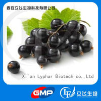 Herbal Products Wholesalers Supply Black Currant Seed Extract