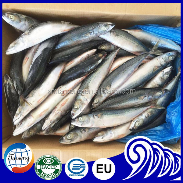 High Quality Seafoods And Frozen Food Ghana Canned Pacific Mackerel