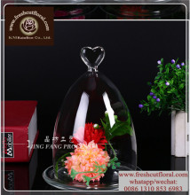 Glass Cloche Bell Jars In Sale Around The World