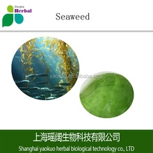 supply organic Seaweed extract 100% pure
