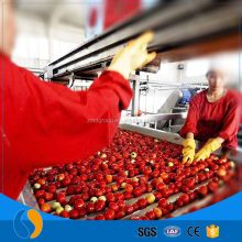 Tomato fruit processing plant