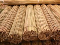Natural dry Bamboo sticks for sale