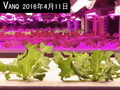 high umol led grow light tube led for lettuce hydroponic vertical farm 30w waterproof