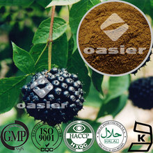 Adaptogenic herb plant extract herbal extract Eleutheroside B+E Siberian Ginseng Extract