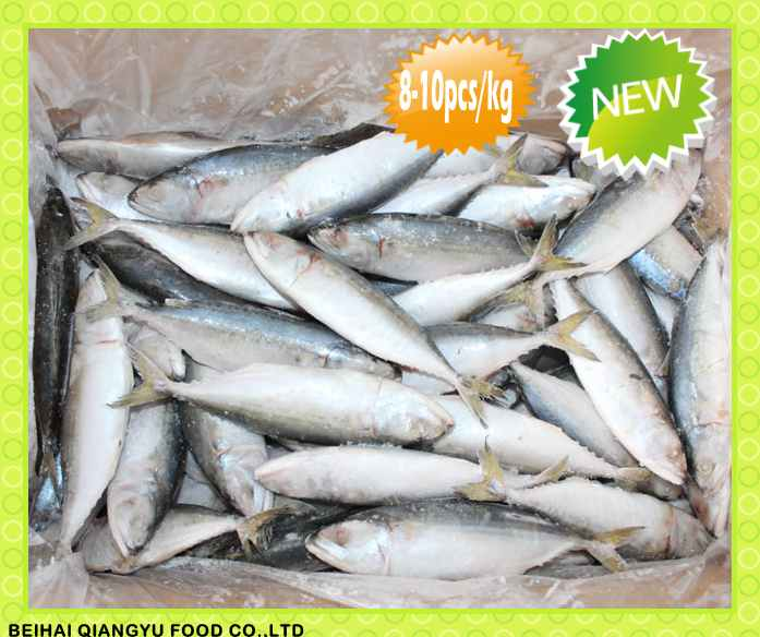 Fresh Arrival good quality frozen horse mackerel fish/Indian Mackerel