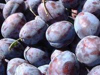 Bulgarian Fresh plums for export