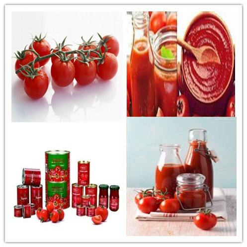 Raw fruit processing-- tomato paste processing plant