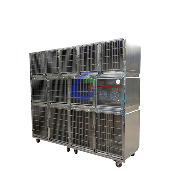 cat medical dog boarding cages