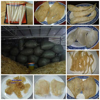 BEST PRICE FOR DRIED FISH MAWS