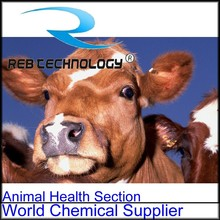 REB GMP amoxicillin veterinary medicines for cattle