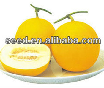 SY round shape white meat hybrid melon seeds