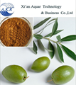 Hot Sale 20% 40% 60% Oleopein olive leaf extract/p.e. oleuropein directly
