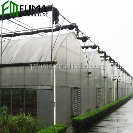 The Cheapset FUMA Agricultural Film Covered Mulit Span Greenhouse