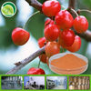 Fresh And Delicious Cherry Fruit Powder Manufacturers