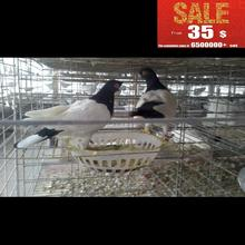 pigeon breeding cage/bird netting/rat breeding cages from china